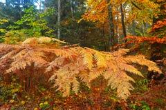 有蕨叶子的秋天森林在11月 库存图片