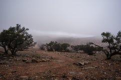 有薄雾和树的Morrocan沙漠 库存图片