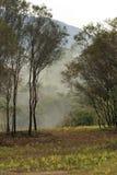 有薄雾在森林里 库存照片