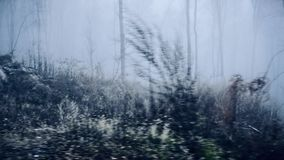 有薄雾森林驾驶 股票录像