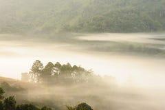 有薄雾热带的森林 免版税库存照片