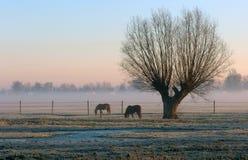 有薄雾的一个范围结构树 免版税库存照片