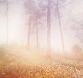 有薄雾的光爆炸抽象照片在树和闪烁bokeh中的点燃 图象被弄脏 免版税库存图片