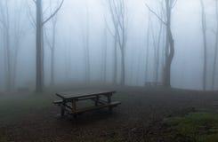 有薄雾的公园 免版税图库摄影