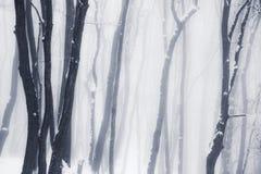 有薄雾的冬天森林 免版税库存图片