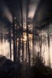 有薄雾的冬天森林 库存图片