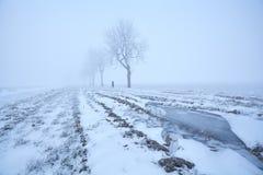 有薄雾的冷淡的早晨视图 图库摄影