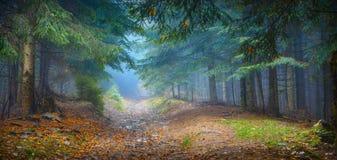 有薄雾的喀尔巴阡山脉的森林 库存图片