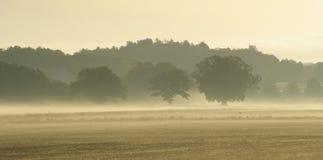 有薄雾的域 库存图片