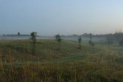 有薄雾的域 库存照片