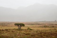 有薄雾的天 图库摄影