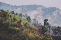 有薄雾的小山,泰国乡下 库存图片
