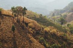 有薄雾的小山-泰国乡下 库存图片