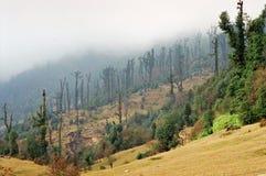 有薄雾的山森林 免版税图库摄影