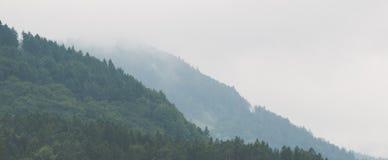 有薄雾的山森林 免版税库存照片