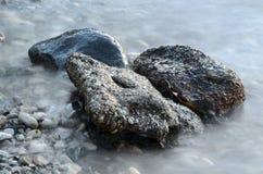 有薄雾的岩石和海草 免版税库存图片