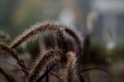 有薄雾的干草 免版税图库摄影
