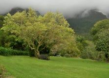 有薄雾的平安的Kirstenbosch植物园开普敦南非 免版税库存图片