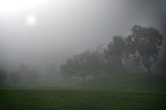 有薄雾的平静的日出 免版税库存图片