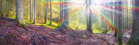 有薄雾的彩虹 免版税图库摄影
