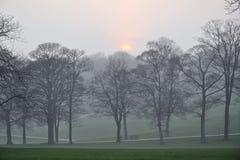 有薄雾的日出在公园 免版税库存图片