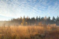 有薄雾的日出在秋天森林里 库存图片