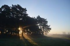 有薄雾的日出通过森林地 库存照片