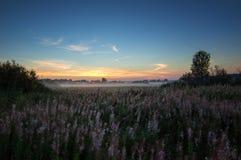 有薄雾的早晨全景在一个领域在夏天,俄罗斯,乌拉尔的 免版税库存图片
