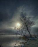 有薄雾的早晨冬天 免版税库存照片