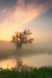 有薄雾的早晨反映结构树 库存照片