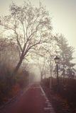有薄雾的早晨在城市森林公园 库存照片