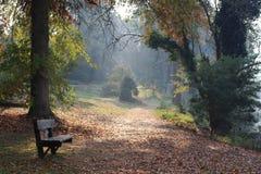 有薄雾的早晨在庭院里 免版税库存照片