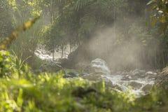 有薄雾的早晨在有阳光的密林 库存图片