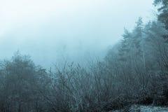 有薄雾的早晨在森林里 库存照片