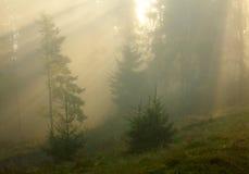 有薄雾的早晨在森林里 免版税库存照片