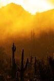 有薄雾的早晨在沙漠用仙人掌仙人掌在亚利桑那和Raindr 免版税库存照片