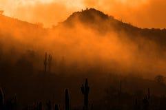 有薄雾的早晨在沙漠用仙人掌仙人掌在亚利桑那 免版税库存照片