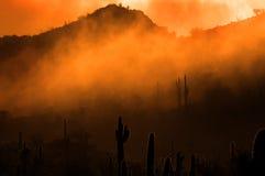 有薄雾的早晨在沙漠用仙人掌仙人掌在亚利桑那 库存图片