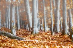 有薄雾的早晨在秋天 库存照片