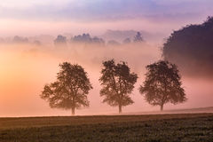 有薄雾的早晨夏天 免版税库存照片