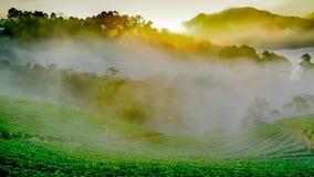 有薄雾的早晨日出在土井Ang khang moun的草莓庭院里 免版税库存图片