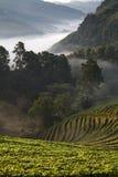 有薄雾的早晨日出在土井Angkhang moun的草莓庭院里 免版税图库摄影