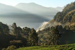 有薄雾的早晨日出在doi angkhang登上的草莓庭院里 免版税库存照片