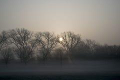 有薄雾的早晨日出 库存照片