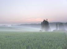 有薄雾的早晨春天 库存照片