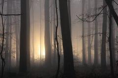 有薄雾的早晨森林地 免版税库存图片
