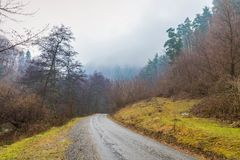 有薄雾的早晨森林风景 免版税库存图片
