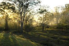 有薄雾的早晨澳大利亚 库存照片