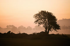 有薄雾的早晨结构树 库存图片