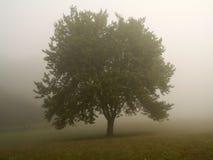 有薄雾的早晨结构树 免版税库存照片